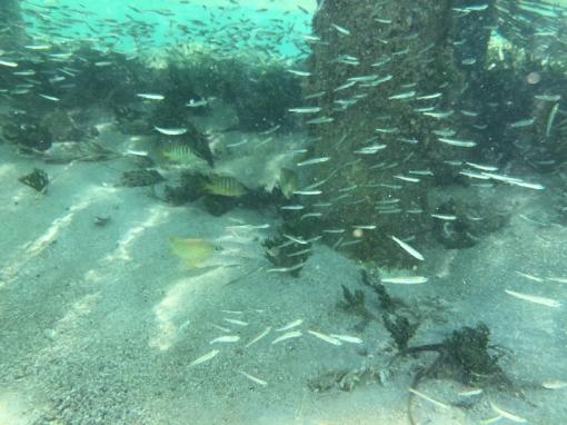 fish_pier